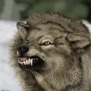 Noam Wolf