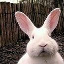Banshee 🐰 Bunny