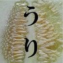 masatomo ryu