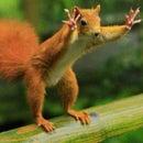 Boy named Squirrel D.