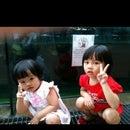 Chaw shiong Lo
