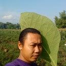 Dimas Cokre'