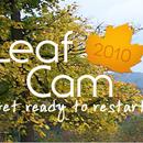Visit Indiana Leaf Cam