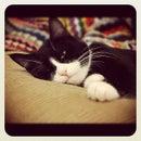 qQ Kitty