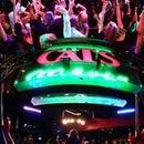 Theworldfamous CatsMeow