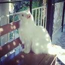 Cat RS