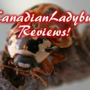Canadianladybug