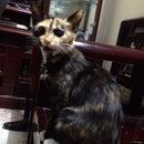 Linh Mèo